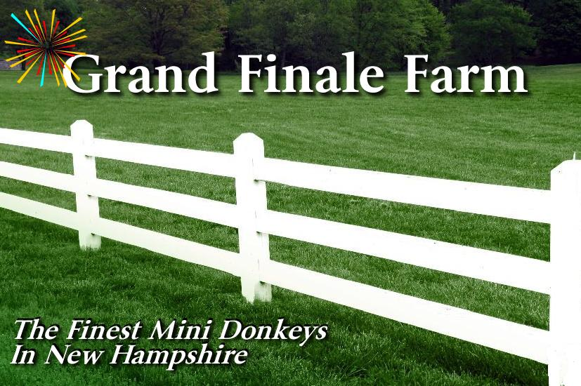 Mini Donkeys from Grand Finale Farm